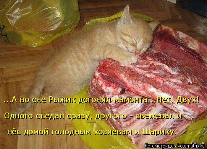 Котоматрица: ...А во сне Рыжик догонял мамонта...Нет! Двух!  Одного съедал сразу, другого - свежевал и нёс домой голодным хозяевам и Шарику.