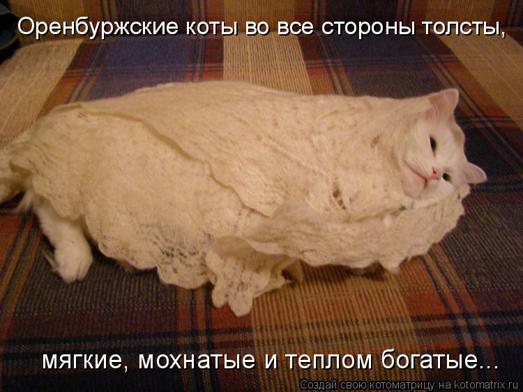 Котоматрица: Оренбуржские коты во все стороны толсты, мягкие, мохнатые и теплом богатые...