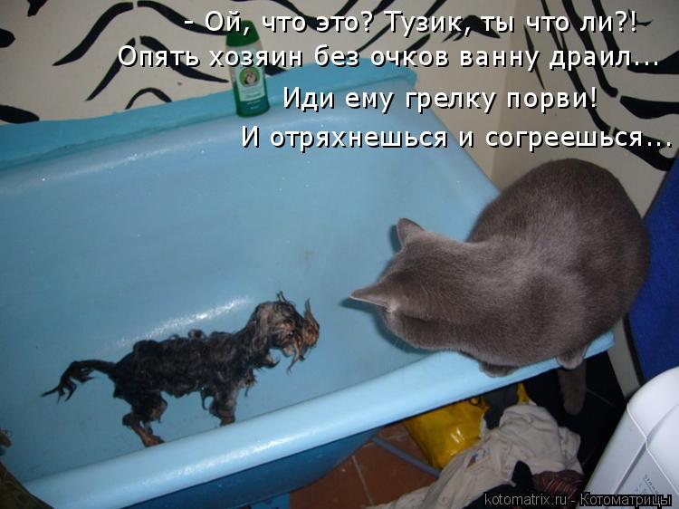 Котоматрица: - Ой, что это? Тузик, ты что ли?! Опять хозяин без очков ванну драил... Иди ему грелку порви! И отряхнешься и согреешься...