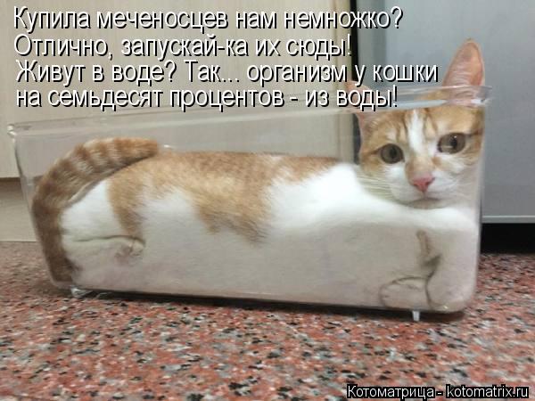 Котоматрица: Купила меченосцев нам немножко? Отлично, запускай-ка их сюды! Живут в воде? Так... организм у кошки на семьдесят процентов - из воды!