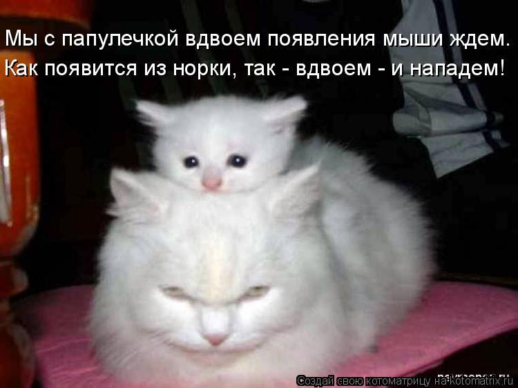 Котоматрица: Мы с папулечкой вдвоем появления мыши ждем. Как появится из норки, так - вдвоем - и нападем!