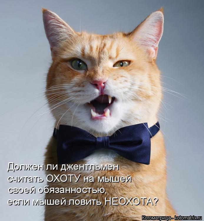 Котоматрица: Должен ли джентльмен  считать ОХОТУ на мышей  своей обязанностью, если мышей ловить НЕОХОТА?
