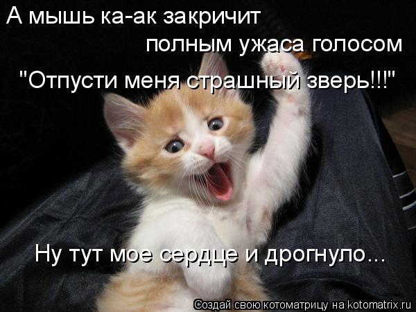 """Котоматрица: А мышь ка-ак закричит  полным ужаса голосом """"Отпусти меня страшный зверь!!!"""" Ну тут мое сердце и дрогнуло..."""