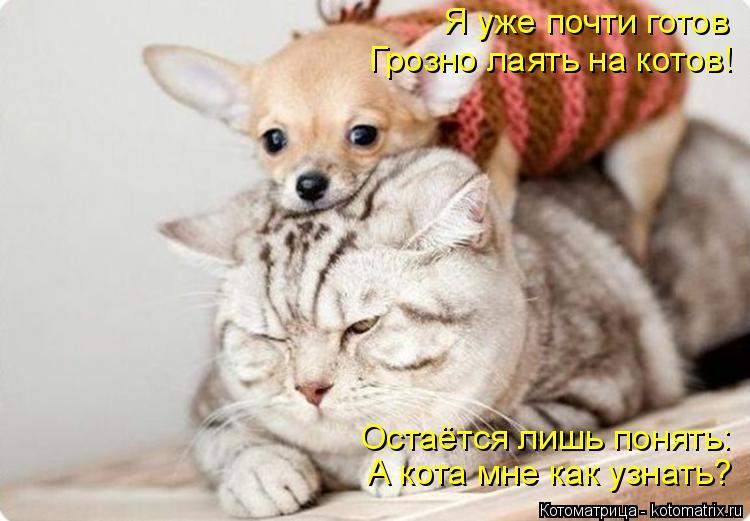 Котоматрица: Я уже почти готов Грозно лаять на котов! Остаётся лишь понять: А кота мне как узнать?