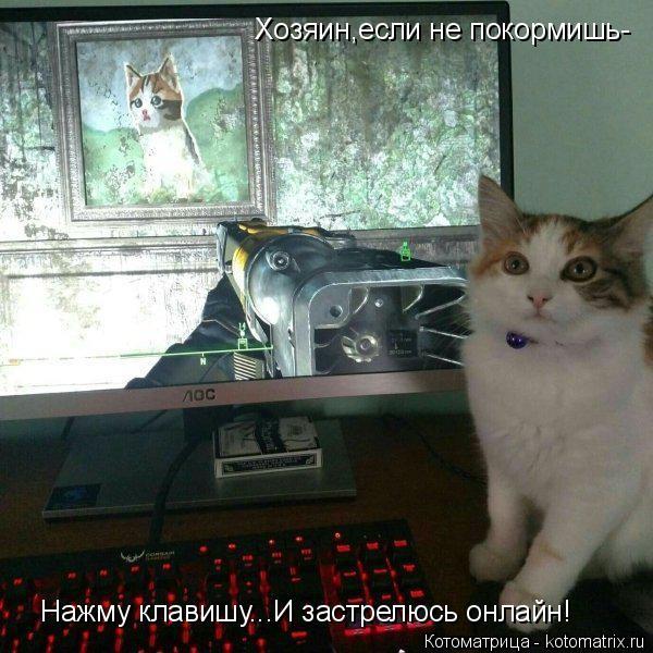 Котоматрица: Хозяин,если не покормишь- Нажму клавишу...И застрелюсь онлайн!