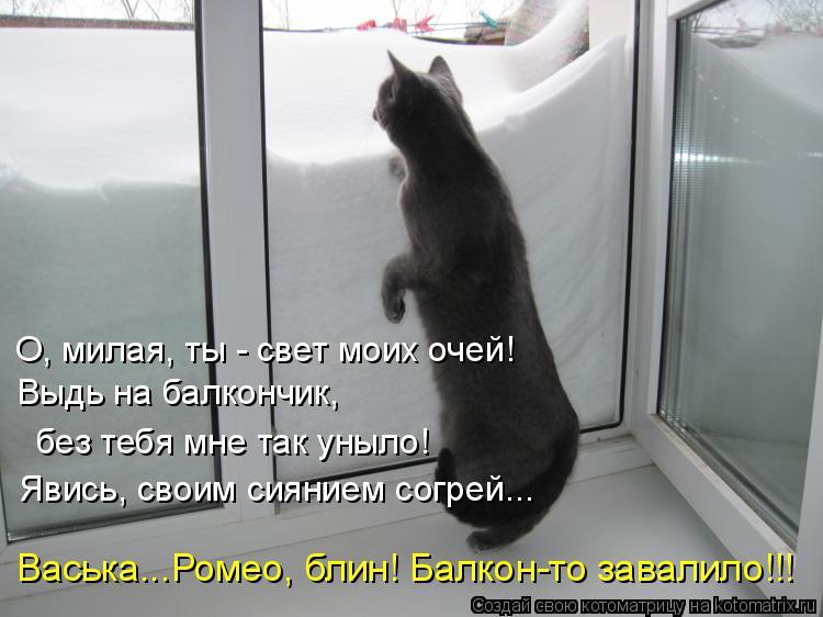Котоматрица: О, милая, ты - свет моих очей! Выдь на балкончик, без тебя мне так уныло! Явись, своим сиянием согрей... Васька...Ромео, блин! Балкон-то завалило!!!