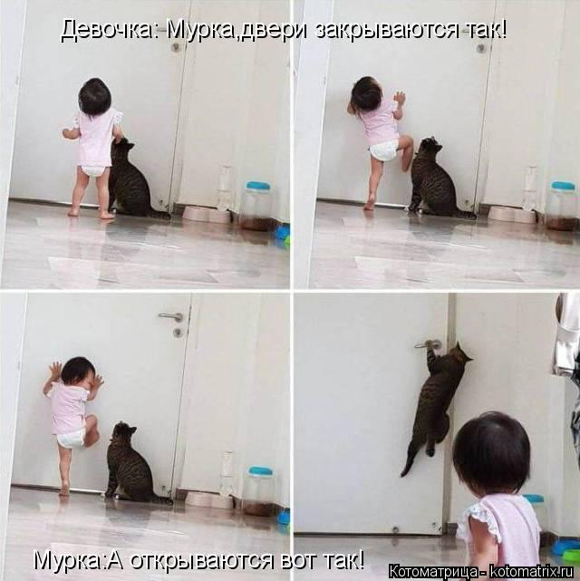 Котоматрица: Девочка: Мурка,двери закрываются так! Мурка:А открываются вот так!