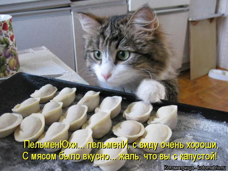 Котоматрица: ПельменЮхи... пельменИ, с виду очень хороши, С мясом было вкусно... жаль, что вы с капустой!