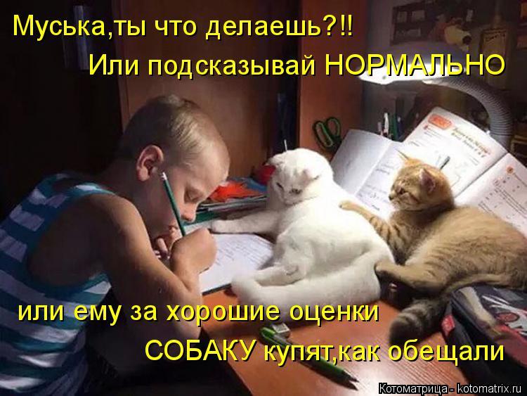 Котоматрица: Муська,ты что делаешь?!! Или подсказывай НОРМАЛЬНО или ему за хорошие оценки СОБАКУ купят,как обещали