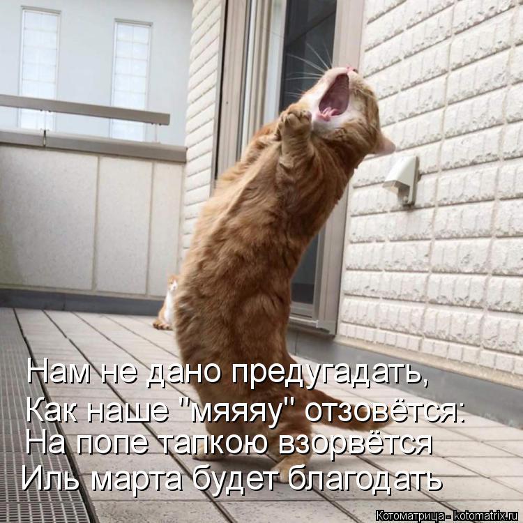 http://kotomatrix.ru/images/lolz/2018/04/07/kotomatritsa_X.jpg