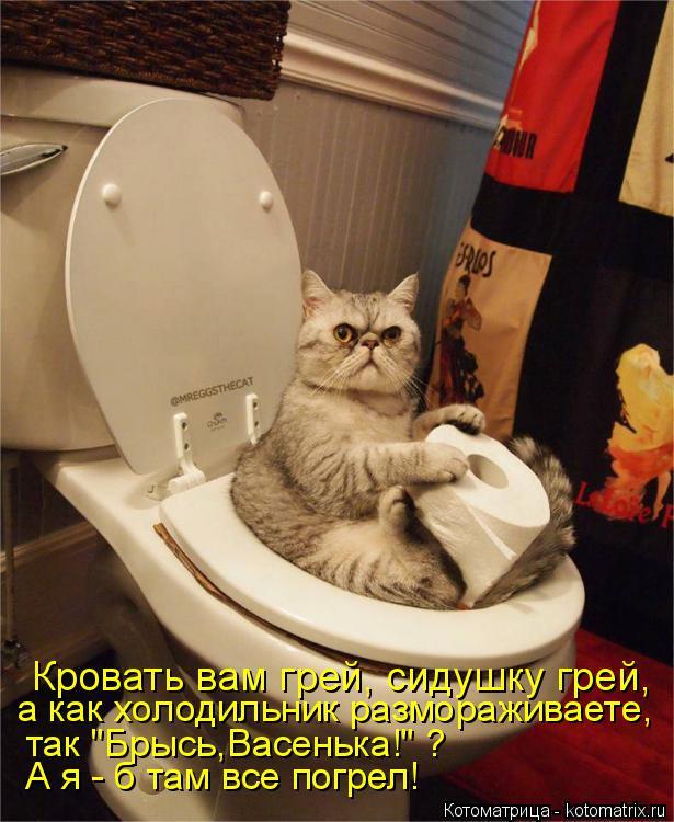 """Котоматрица: Кровать вам грей, сидушку грей, а как холодильник размораживаете, так """"Брысь,Васенька!"""" ? А я - б там все погрел!"""