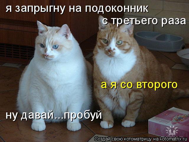Котоматрица: я запрыгну на подоконник  с третьего раза а я со второго ну давай...пробуй