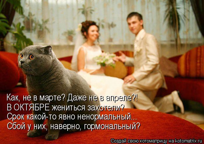 Котоматрица: Как, не в марте? Даже не в апреле?! В ОКТЯБРЕ жениться захотели? Срок какой-то явно ненормальный... Сбой у них, наверно, гормональный?