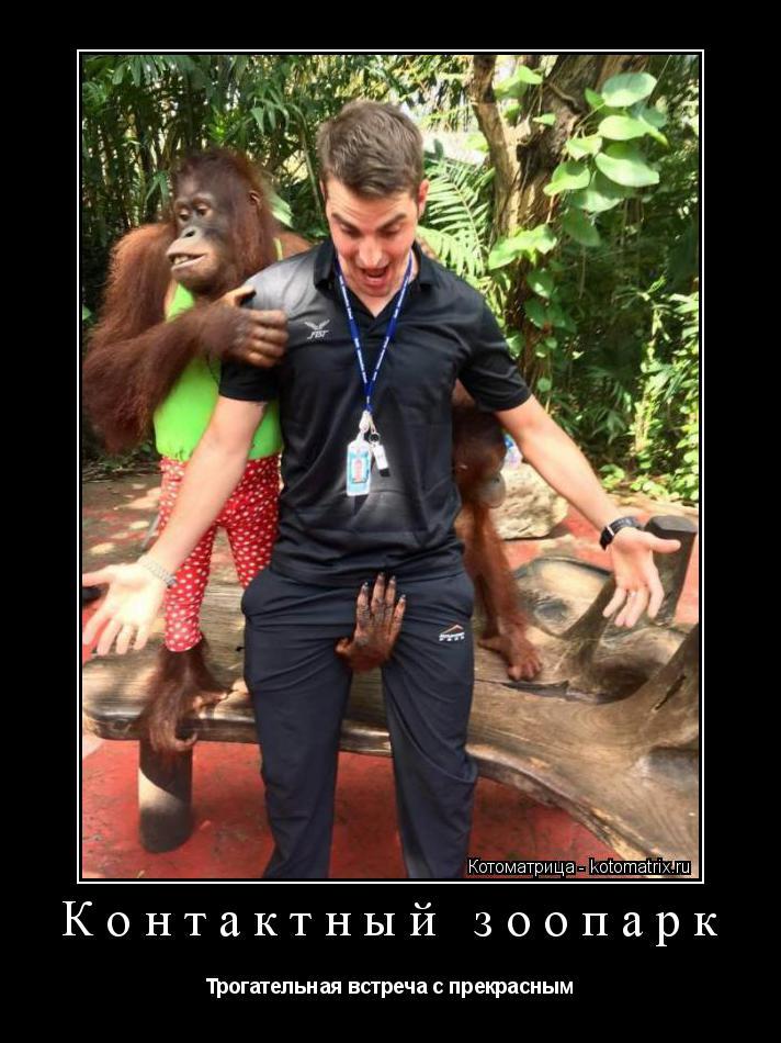 Котоматрица: Контактный зоопарк Трогательная встреча с прекрасным