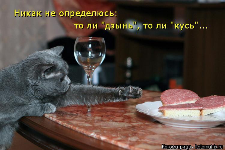 """Котоматрица: Никак не определюсь: то ли """"дзынь"""", то ли """"кусь""""..."""