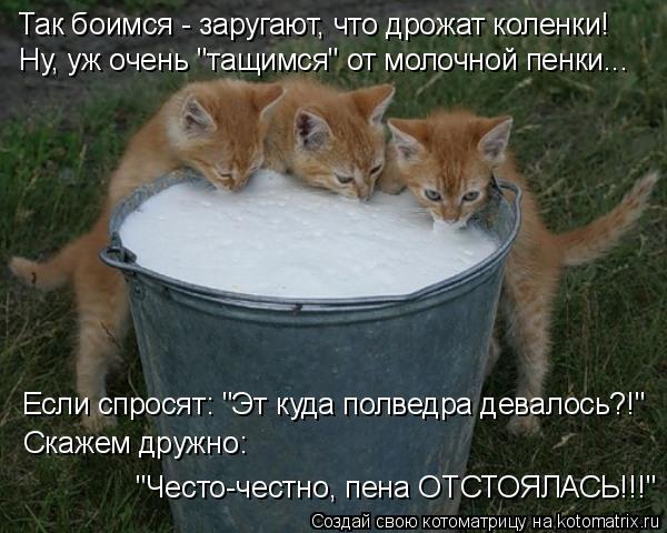 """Котоматрица: Так боимся - заругают, что дрожат коленки! Ну, уж очень """"тащимся"""" от молочной пенки...  Если спросят: """"Эт куда полведра девалось?!"""" Скажем дружно:"""