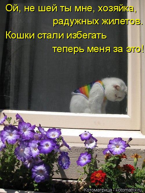 Котоматрица: Ой, не шей ты мне, хозяйка,  радужных жилетов. Кошки стали избегать теперь меня за это!