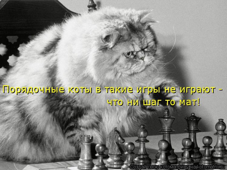 Котоматрица: Порядочные коты в такие игры не играют -  что ни шаг то мат!