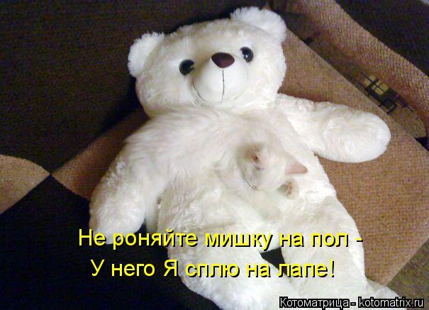 Котоматрица: Не роняйте мишку на пол - У него Я сплю на лапе!