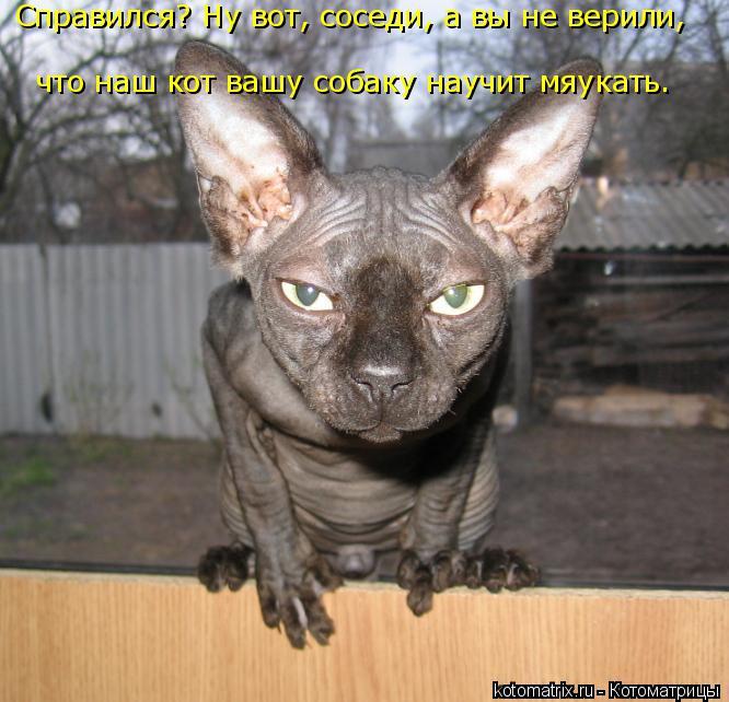 Котоматрица: Справился? Ну вот, соседи, а вы не верили,  что наш кот вашу собаку научит мяукать.