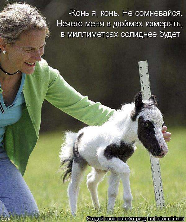 Котоматрица: -Конь я, конь. Не сомневайся. Нечего меня в дюймах измерять, в миллиметрах солиднее будет