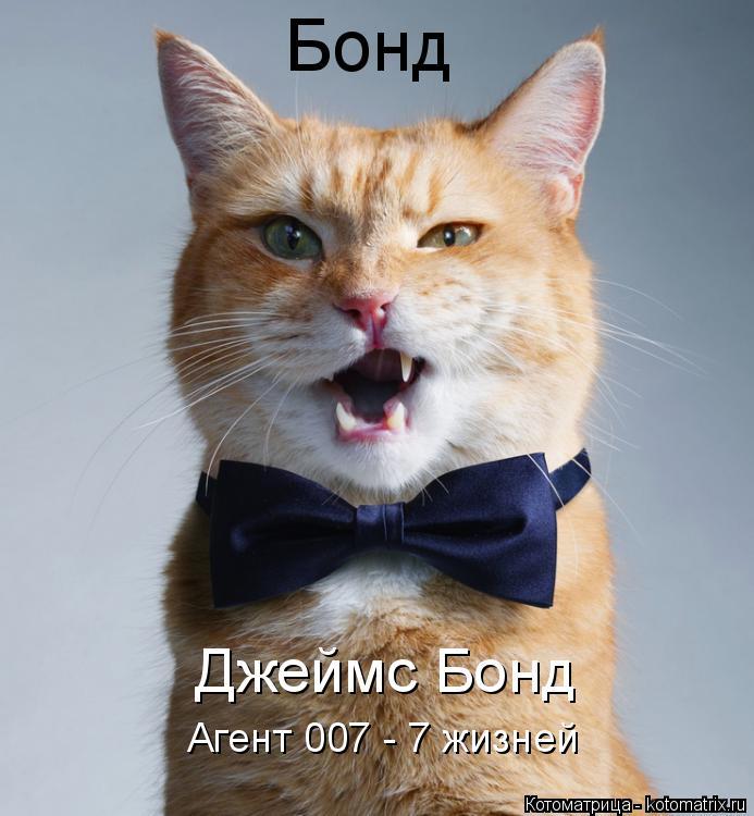 Котоматрица: Бонд Джеймс Бонд Агент 007 - 7 жизней