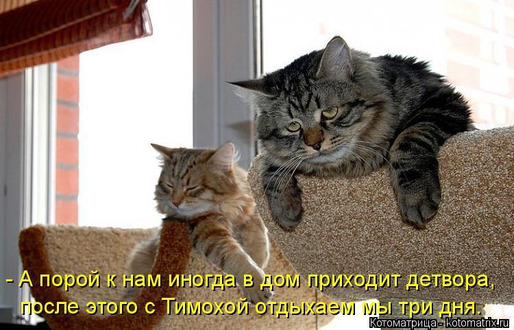 Котоматрица: - А порой к нам иногда в дом приходит детвора, после этого с Тимохой отдыхаем мы три дня.