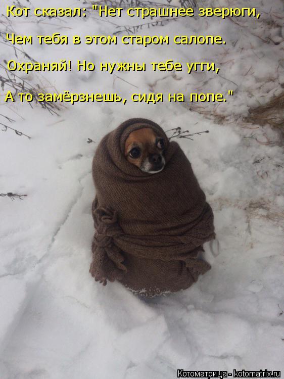 """Котоматрица: Чем тебя в этом старом салопе. Кот сказал: """"Нет страшнее зверюги, Охраняй! Но нужны тебе угги, А то замёрзнешь, сидя на попе."""""""