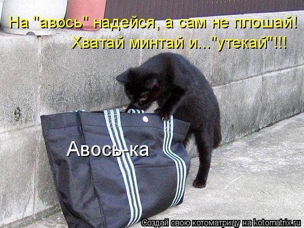"Котоматрица: На ""авось"" надейся, а сам не плошай! Хватай минтай и...""утекай""!!!  Авось-ка"