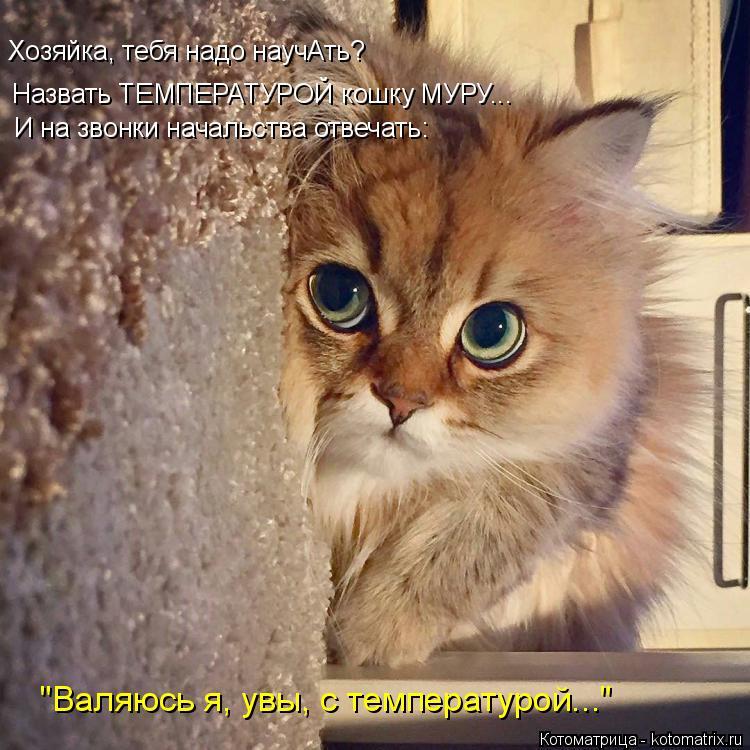 """Котоматрица: Назвать ТЕМПЕРАТУРОЙ кошку МУРУ... Хозяйка, тебя надо научАть? И на звонки начальства отвечать: """"Валяюсь я, увы, с температурой..."""""""