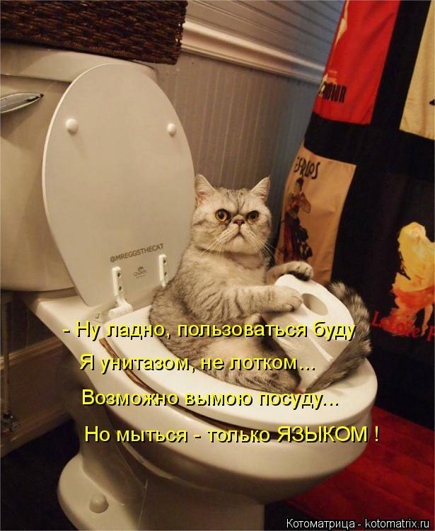 Котоматрица: - Ну ладно, пользоваться буду Я унитазом, не лотком... Возможно вымою посуду... Но мыться - только ЯЗЫКОМ !