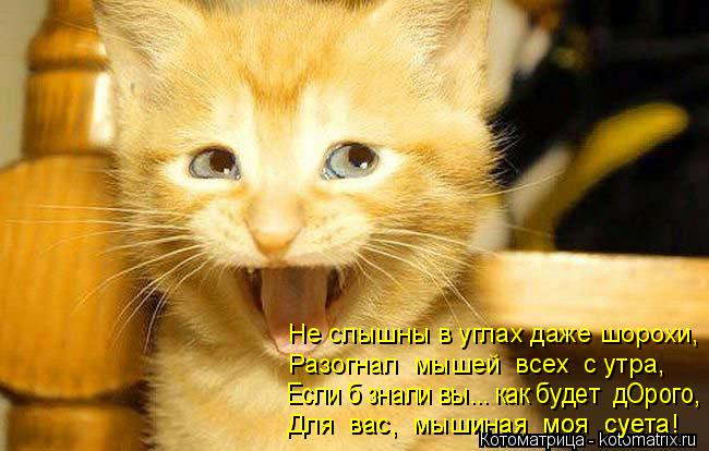 Котоматрица: Не слышны в углах даже шорохи, Разогнал  мышей  всех  с утра,  Если б знали вы... как будет  дОрого, Для  вас,  мышиная  моя  суета! Для  вас,  мышина
