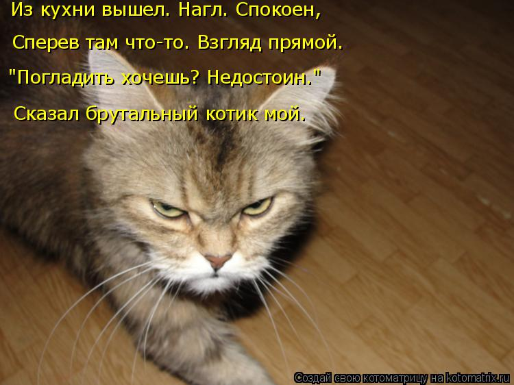 """Котоматрица: Сперев там что-то. Взгляд прямой. Из кухни вышел. Нагл. Спокоен, """"Погладить хочешь? Недостоин."""" Сказал брутальный котик мой."""