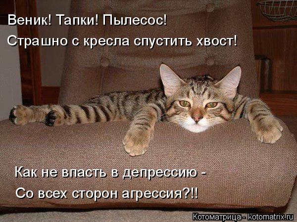 Котоматрица: Веник! Тапки! Пылесос! Страшно с кресла спустить хвост! Как не впасть в депрессию - Со всех сторон агрессия?!!
