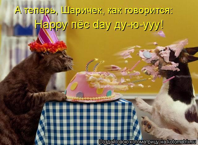 Котоматрица: А теперь, Шаричек, как говорится: Happy пёс day ду-ю-ууу!