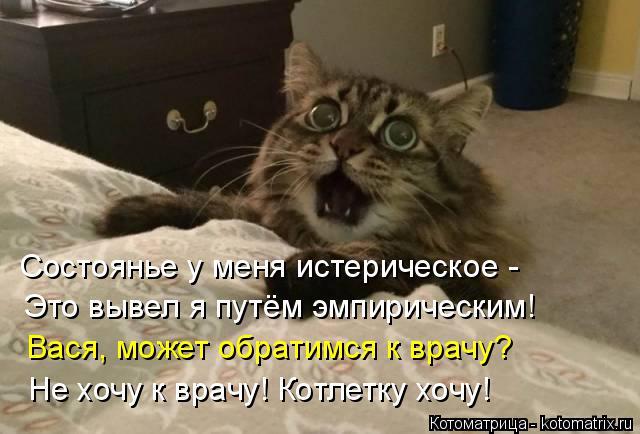 Котоматрица: Состоянье у меня истерическое - Это вывел я путём эмпирическим! Вася, может обратимся к врачу? Не хочу к врачу! Котлетку хочу!