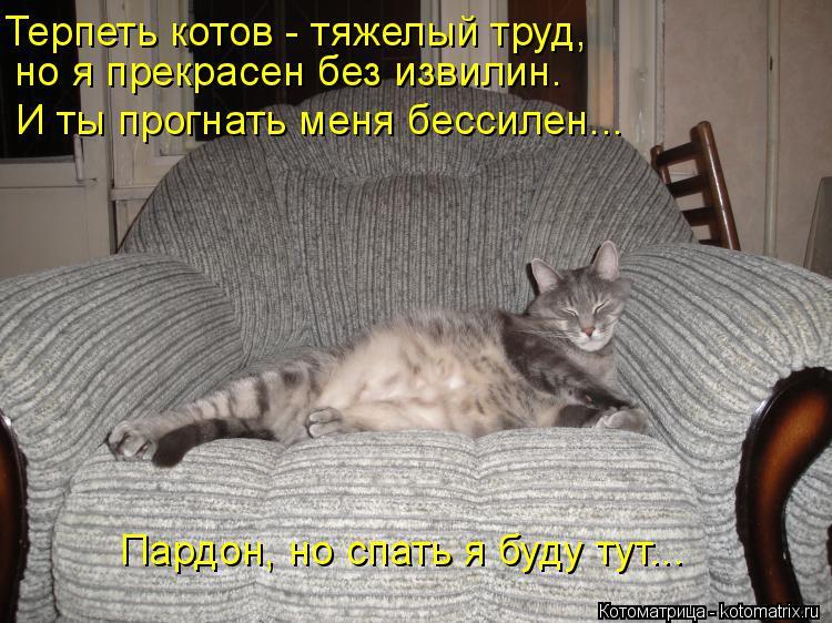 Котоматрица: Терпеть котов - тяжелый труд,  но я прекрасен без извилин. И ты прогнать меня бессилен... Пардон, но спать я буду тут...