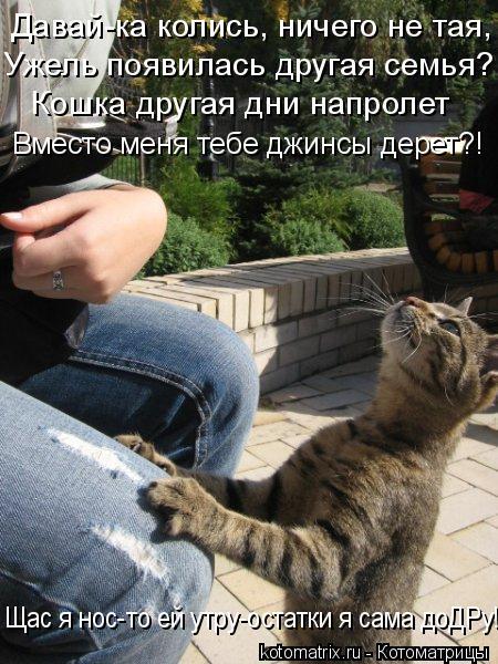 Котоматрица: Давай-ка колись, ничего не тая, Ужель появилась другая семья? Кошка другая дни напролет Вместо меня тебе джинсы дерет?! Щас я нос-то ей утру-о?