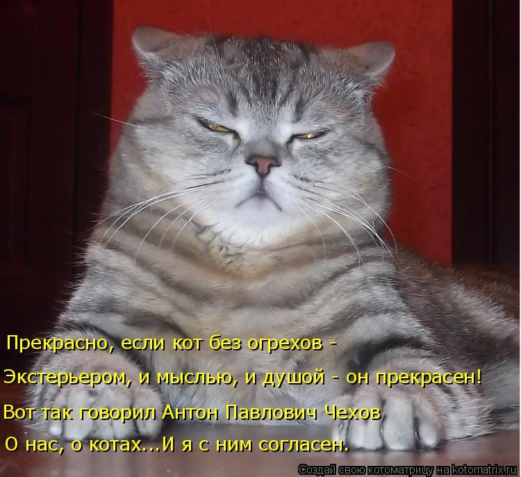 Котоматрица: О нас, о котах...И я с ним согласен. Вот так говорил Антон Павлович Чехов Экстерьером, и мыслью, и душой - он прекрасен! Прекрасно, если кот без ?