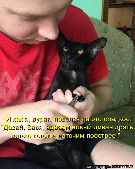 """Котоматрица: """"Давай, Вася, вдвоем новый диван драть, только коготки наточим поострее!"""" - И как я, дурак, повелся на это сладкое:"""