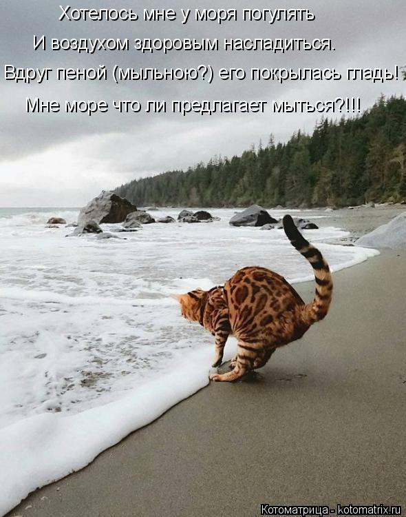 Котоматрица: Хотелось мне у моря погулять И воздухом здоровым насладиться. Вдруг пеной (мыльною?) его покрылась гладь! Мне море что ли предлагает мыться?!