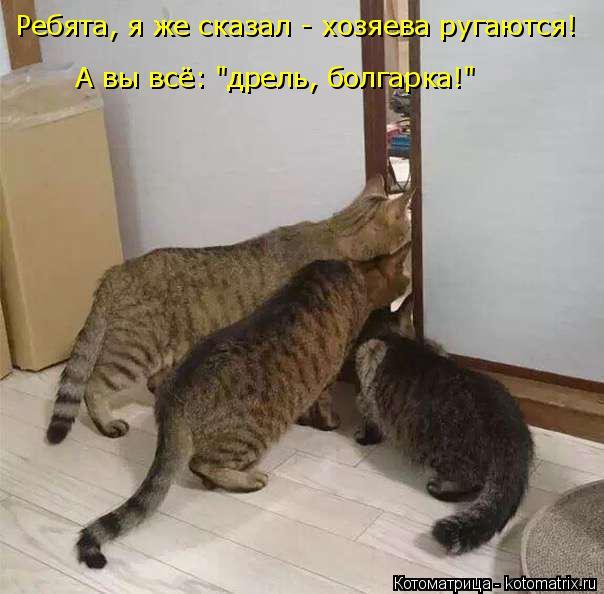 """Котоматрица: Ребята, я же сказал - хозяева ругаются!  А вы всё: """"дрель, болгарка!"""""""
