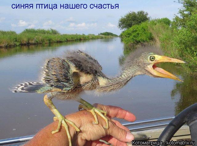 Котоматрица: синяя птица нашего счастья