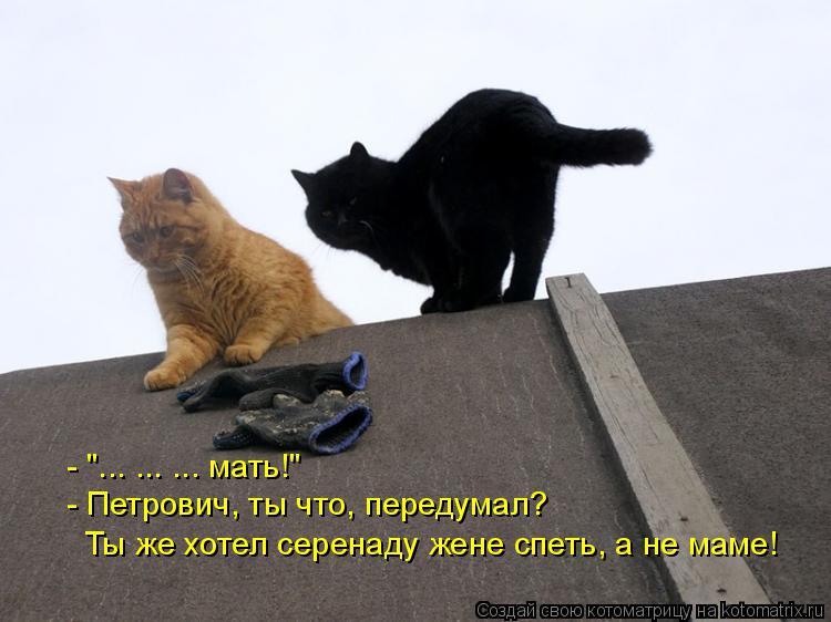 """Котоматрица: - """"... ... ... мать!"""" - Петрович, ты что, передумал?  Ты же хотел серенаду жене спеть, а не маме!"""