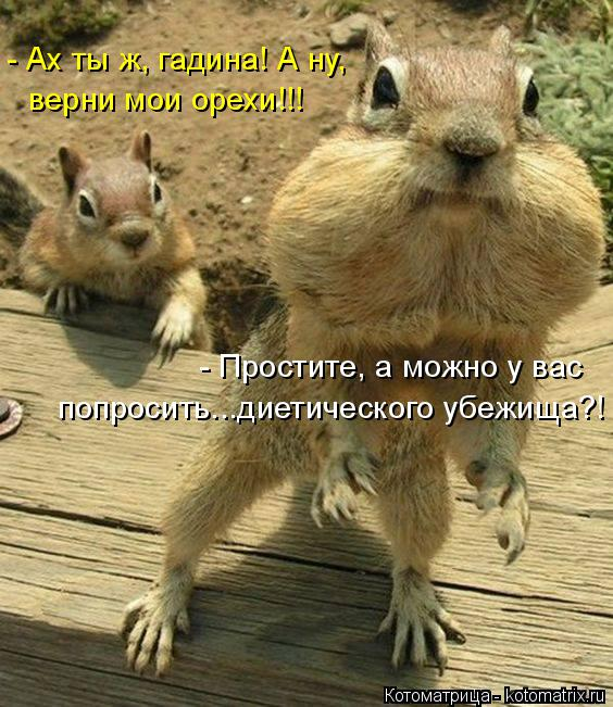 Котоматрица: - Ах ты ж, гадина! А ну,  верни мои орехи!!! - Простите, а можно у вас  попросить...диетического убежища?!