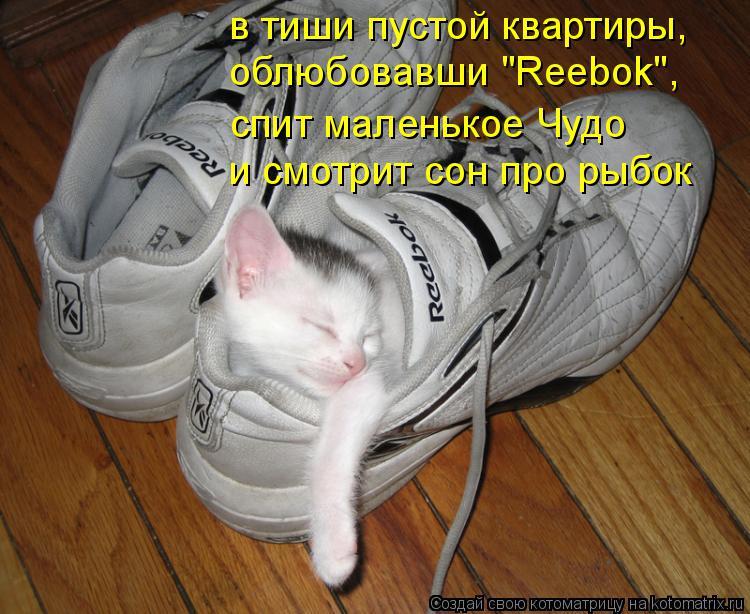 """Котоматрица: в тиши пустой квартиры, облюбовавши """"Reebok"""", и смотрит сон про рыбок спит маленькое Чудо"""