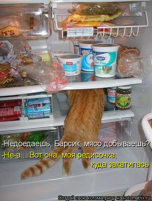 Котоматрица: -Недоедаешь, Барсик, мясо добываешь? -Не-а... Вот она, моя редисочка,  куда закатилась