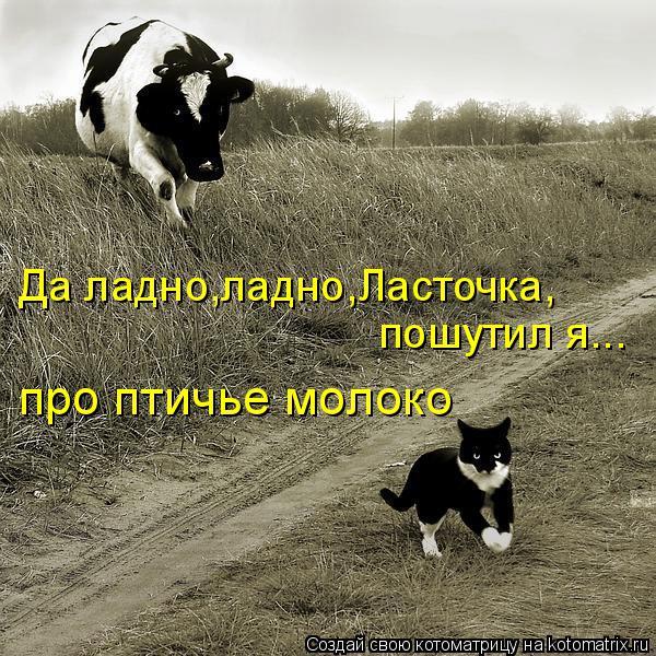 Котоматрица: Да ладно,ладно,Ласточка, пошутил я... про птичье молоко