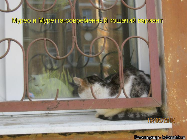 Котоматрица: Мурео и Муретта-современный кошачий вариант.
