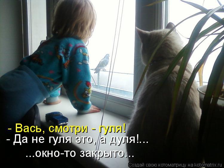 Котоматрица: - Вась, смотри - гуля! - Да не гуля это, а дуля!... ...окно-то закрыто...